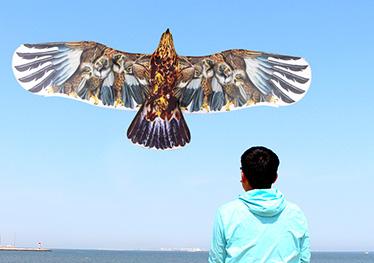 盘鹰工艺风筝