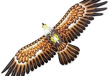 大型盘鹰风筝